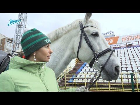 Скрытая камера «Зенит-ТВ» на матче против «Томи»