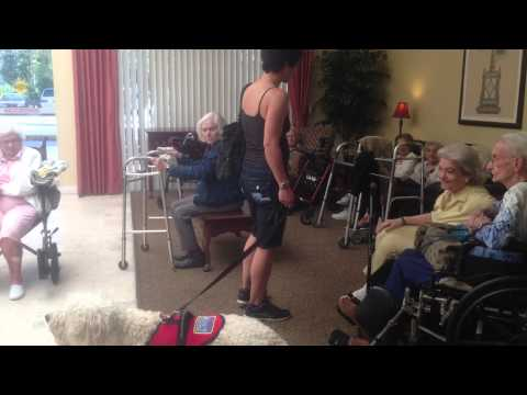 Dog Training at Assisted Living Facility In Fort Lauderdale - Therapy Dog Training