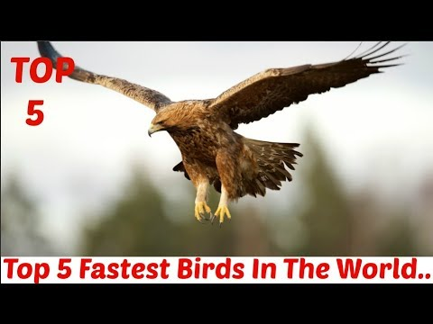 Top 5 Fastest Birds in the world || Fastest animals on the earth...
