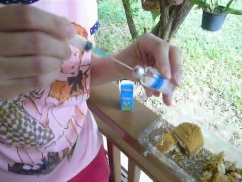 การให้ยาฉีดไอเวอร์เม็กติน ทางอาหาร