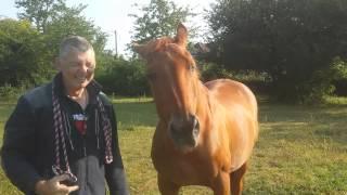 Horse ear wax