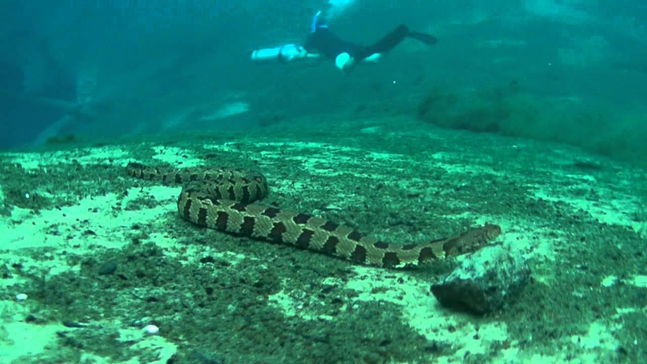 Snake Underwater In Morrison Spring Youtube