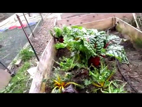 2016 French Biointensive Organic Raised Bed Garden--Update 4