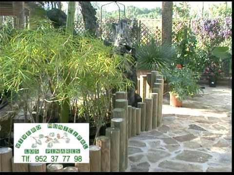 Plantas de patios mediterr neos 2 parte de 2 youtube for Plantas para patios