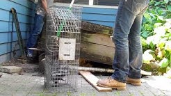 U.S. Wildlife Removal Service- Skunk Control 630-432-4759