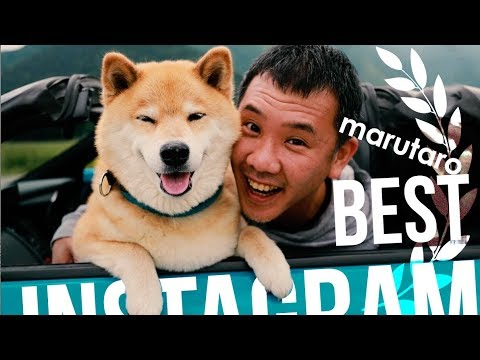 BEST MARUTARO DOG VIDEOS - FUNNY VIDEO SERIES