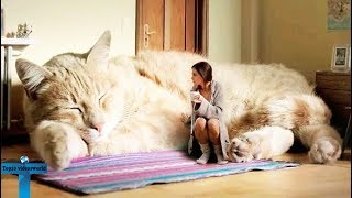 Top 12 Most Unusual & Abnormal Pets In The World