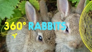 Rabbits in Spitalfields City Farm | 360 Degrees for Kids