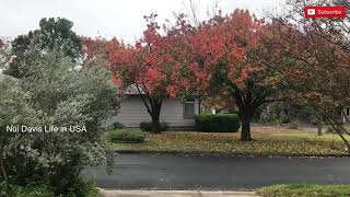 อเมริกา - ไทย เวลาช่างแตกต่างกันมากเหลือเกิน/ ใบไม้เปลี่ยนสีที่เมืองนอก /ชีวิตต่างแดน