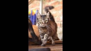 Коты, кошки и котята из Краснодарского приюта ищут хозяев
