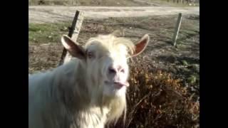 Подбор приколов -про козлов