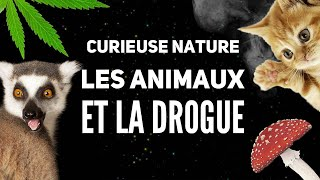 Les animaux se droguent ils dans la nature ?