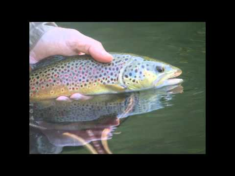 Fly Fishing The Western New York Trico Hatch