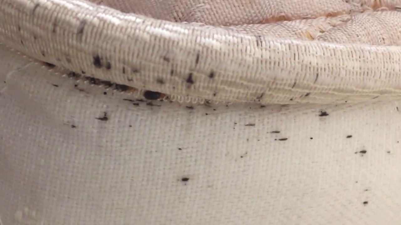 Signs Of Bed Bugs Youtube