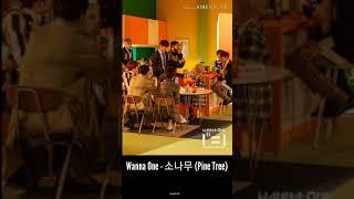 Lirik Terjemahan Wanna One - 소나무 (Pine Tree) [Rom-Indo] Photo.ver