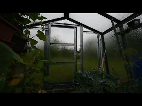 Summer storm in the greenhouse, raindrops falling on the glass [Without speaking]