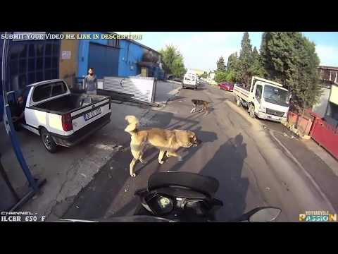 ANGRY DOGS vs BIKERS & DOGS ATTACKING MOTORCYCLE | BAD DOGS [Ep #05] 🌟 BEST Compilation 2017