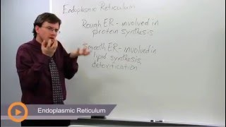 Endoplasmic Reticulum - Learn biology from a real expert