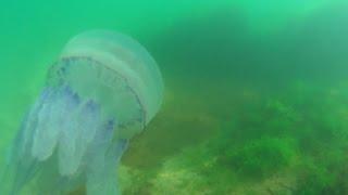 Черное море 2016. Лазурное, Железный порт(ПОДПИШИСЬ НА НОВОЕ ВИДЕО:https://www.youtube.com/channel/UCXSyU0FZNfeaLC3UwLGd0Ig/videos ..., 2016-10-14T20:15:54.000Z)