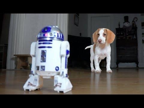 Cute Puppy vs. R2D2: Cute Puppy Potpie, Funny Dogs Maymo & Penny
