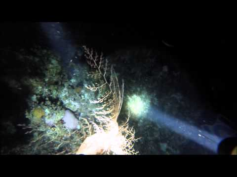 Night Dive Marine Garden Ocho Rios Jamaica 19SEP2014