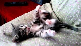 Kačiukas / Kitten / Котенок