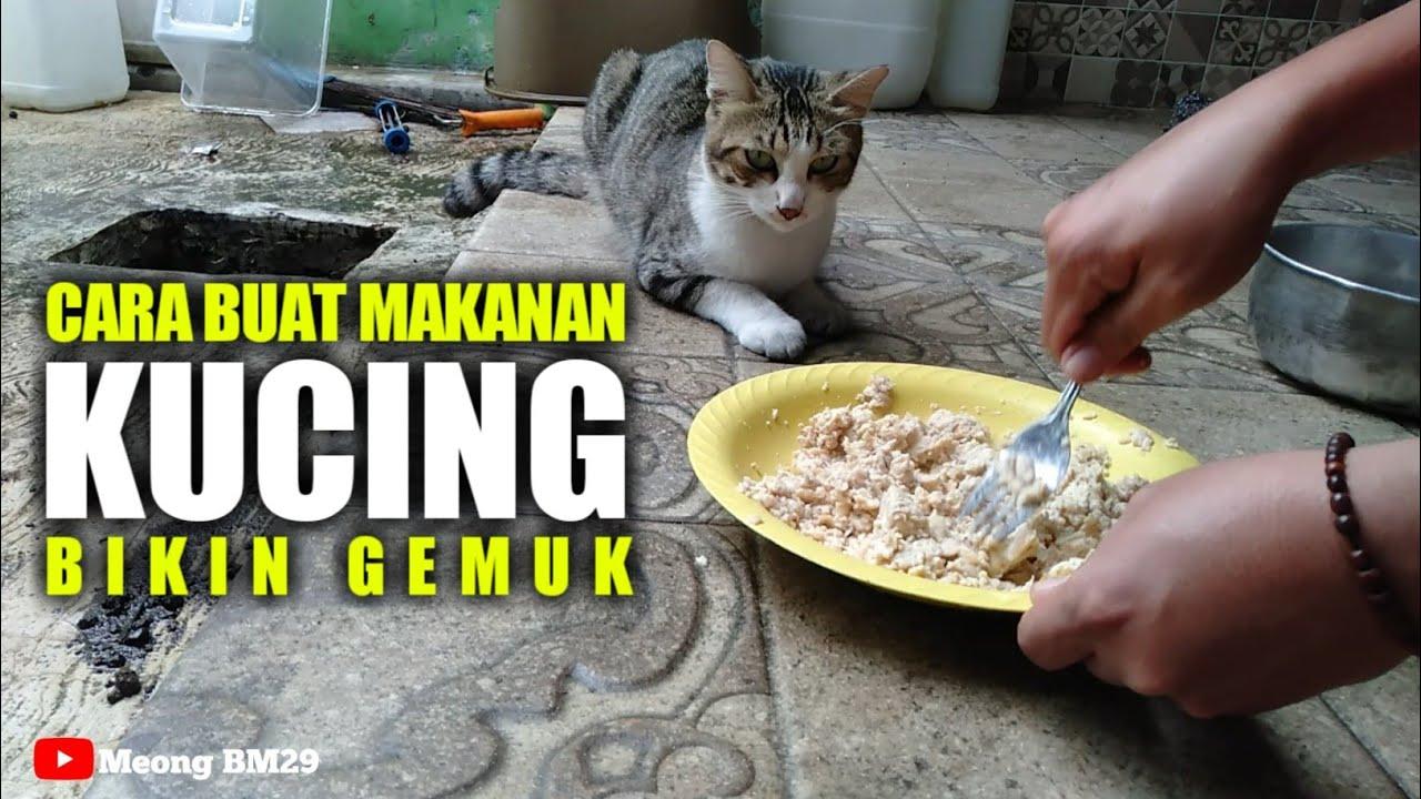 Cara Buat Makanan Kucing Di Jamin Bikin Gemuk Youtube
