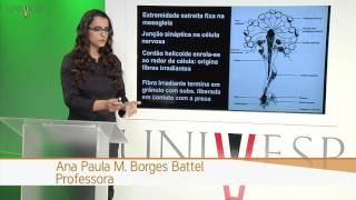 zoologia de invertebrados aula 5 filo ctenophora