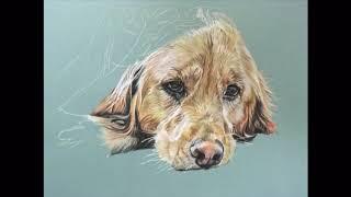 Photo Timelapse Drawing of Dog: Golden Retriever
