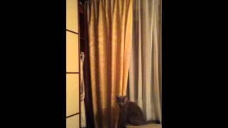 Плюшевые коты, прыгучяя смесь