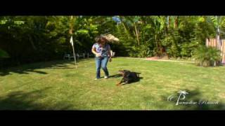 Dog Training Los Angeles Paradise Ranch