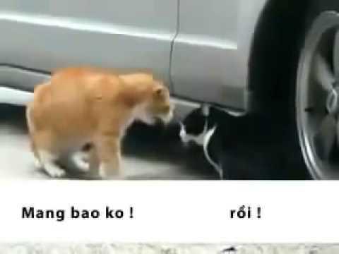 [Funny] Hai vợ chồng nhà mèo cãi nhau siêu hài