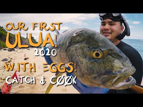 ULUA (Omilu/Bluefin Trevally) W/EGGS! SASHIMI & SEARED! - Catch And Cook - Spearfishing Hawaii -
