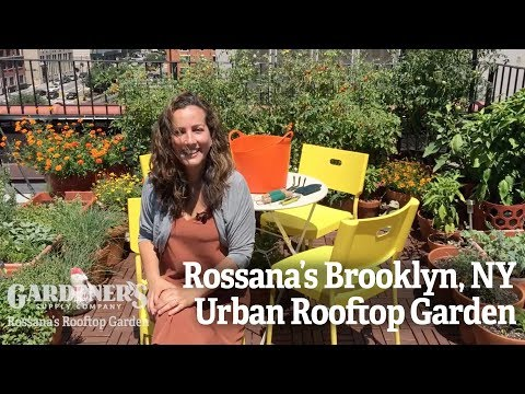 Rossana's Brooklyn NY