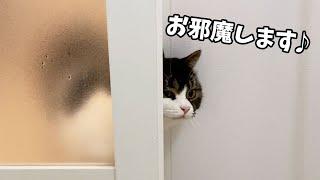 ママのお風呂を覗く息子猫