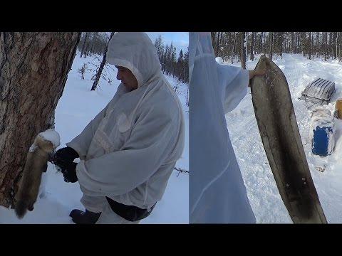 Промысел соболя//Охота на Северного Оленя//Закрытие сезона//Путешествие в Эвенкию