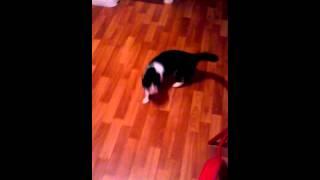 Кошка услышала звук кота