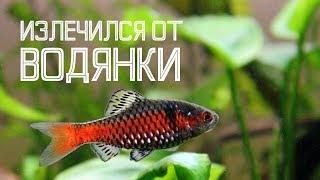 ВОДЯНКА / Болезни аквариумных рыб