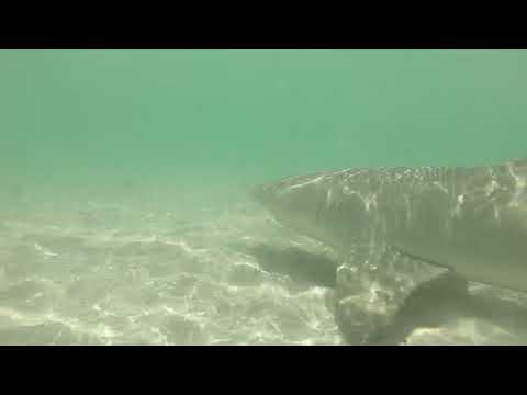 Tiburon En Miami Beach