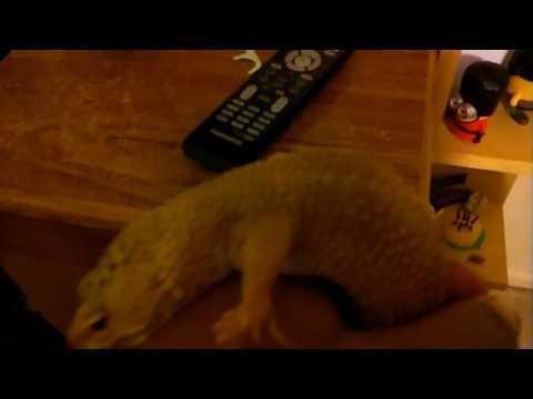 Gecko away
