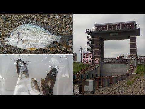 荒川ロックゲートで釣り、夏の終わりのセミの大葉巻き天ぷらができました
