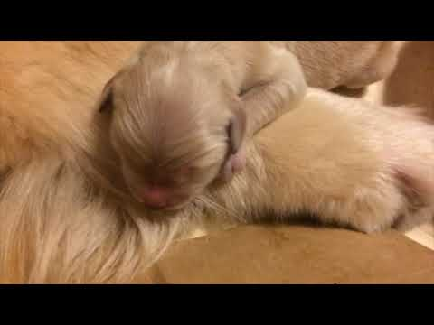 【1日目】キッカが無事5頭の赤ちゃんを産みました