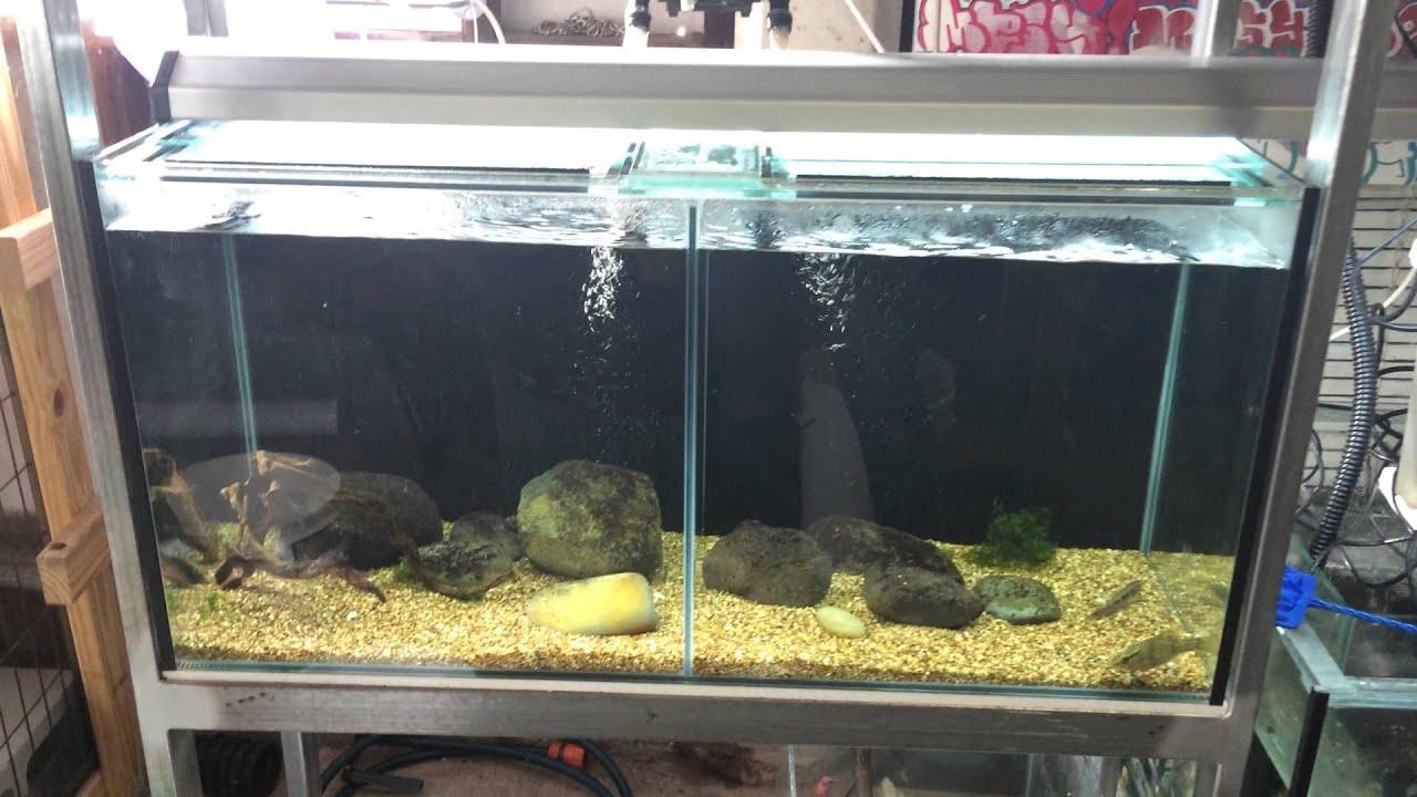 Video tour fish tank pond rack setup and bonus dog for Koi pond setup