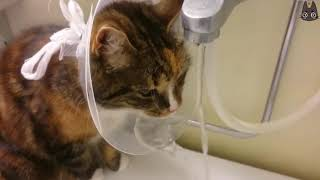 Cats vs the Cone of Shame! (A Compilation)