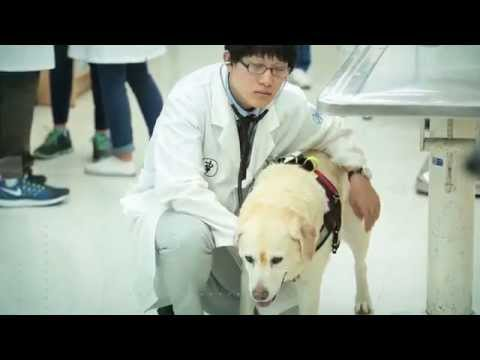 Veterinary medical teaching hospital in Seoul National University(서울대동물병원 영문홍보영상)