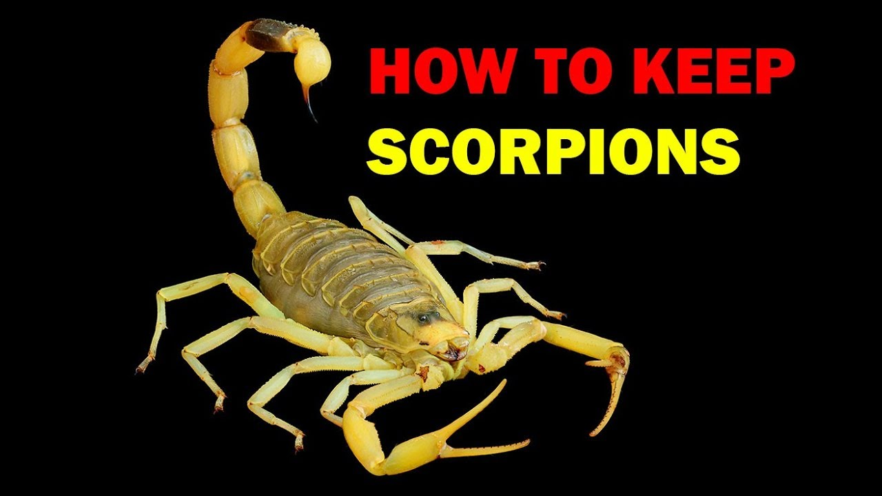 How to keep Scorpions - Weird and Wonderful Pets