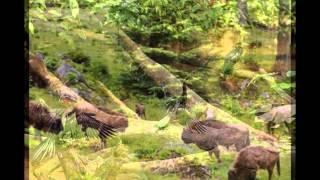 звери в лесу