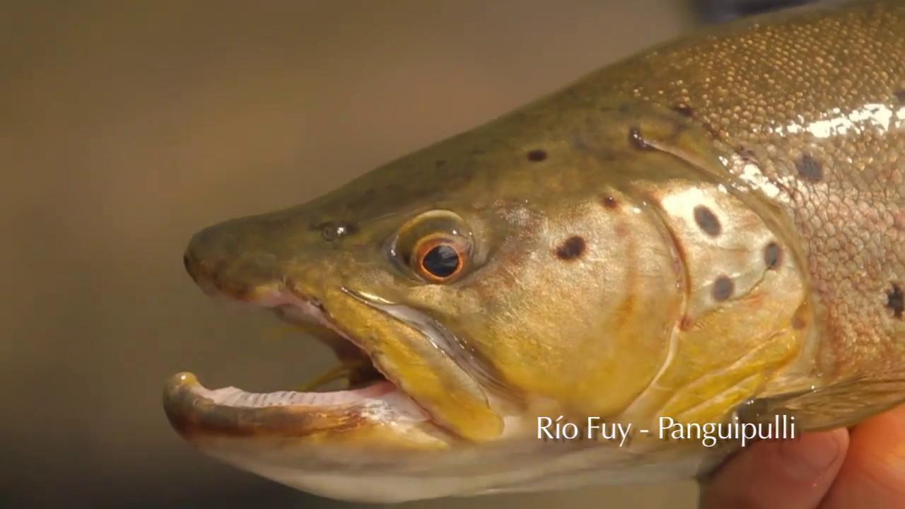 Pesca Recreativa   Región de Los Ríos
