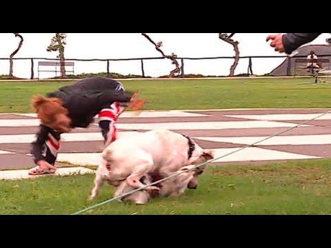 Violencia canina: Dogo argentino ataca ferozmente a perro de raza pequeña