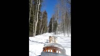 Krablooniks Dog Sledding In Aspen, Colorado W/ #parkerjaxward 3.23.14